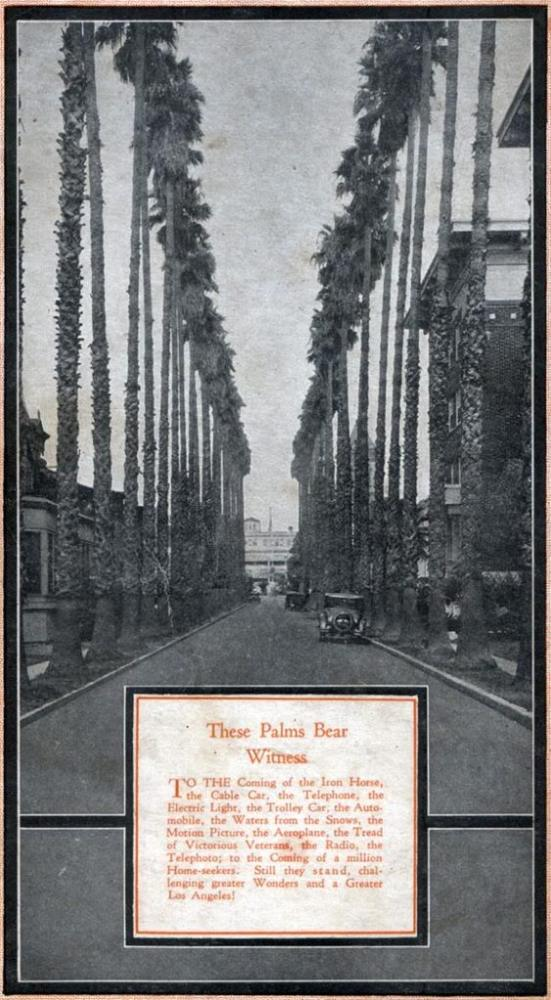 The Oldest Palm Trees in Los Angeles (6/6)
