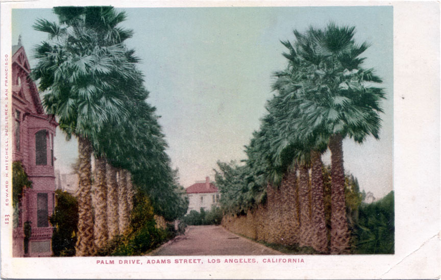 The Oldest Palm Trees in Los Angeles (1/6)