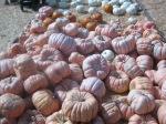 Weird pumpkins, as your kids will undoubtedly call them.